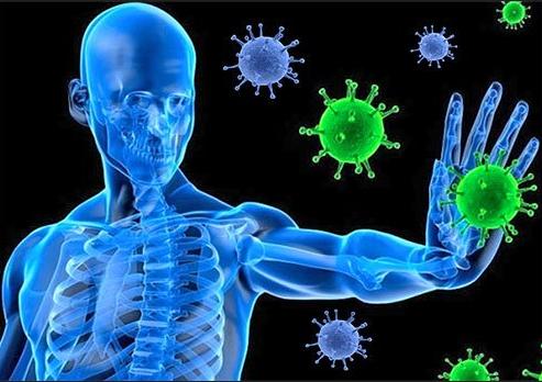 Immunsystemet er kritisk
