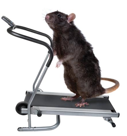 mus og motion